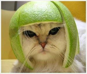 kucing helm