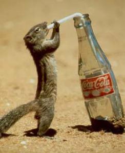 funny cola